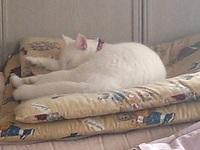 cat_111