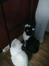 cat_119