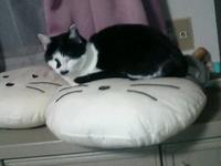 Cat_123_1