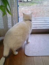 cat_125