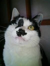 Cat_129