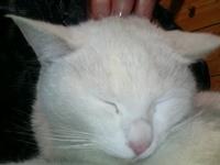Cat_135