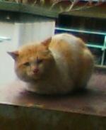Cat_136_1