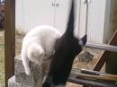 Cat_140_3