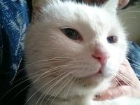 Cat_142