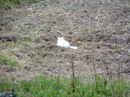 Cat_143