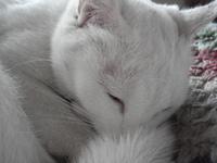 Cat_156