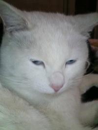 Cat_190
